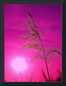 ## reed Backlight  dark pink