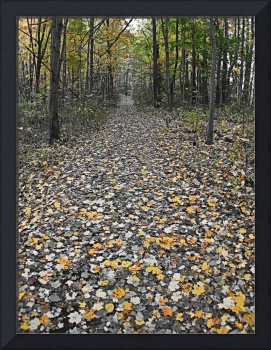 yellow leaf trail
