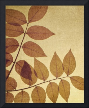 Natural Canvas Botanicals, Brown