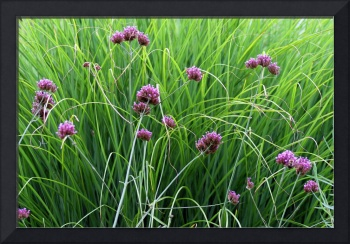 Verbena and Grasses