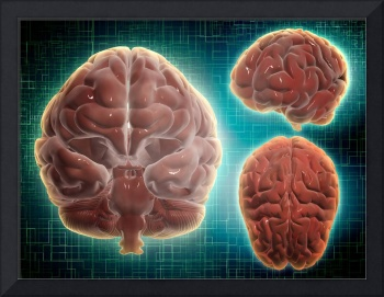 Conceptual image of human brain at different angle