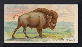 Vintage Illustration of a Buffalo (1890)