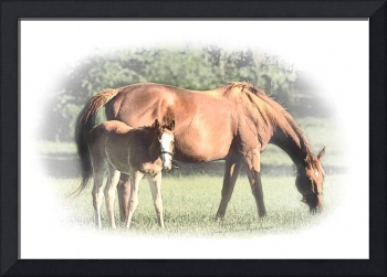 Morning - Mare and Foal