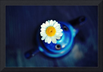 Daisy Tea Fine Art Photography