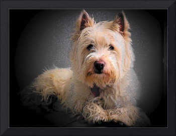 Princess Phoebe - West Highland White Terrier