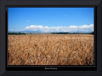 Cyprus summer fields