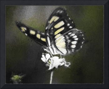 Butterfly Photography and Art