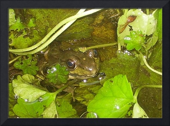 frog hiding in pond plants