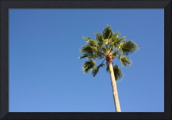 Jayne's palm trees in Florida 2