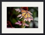 ButterflyPrints gallery