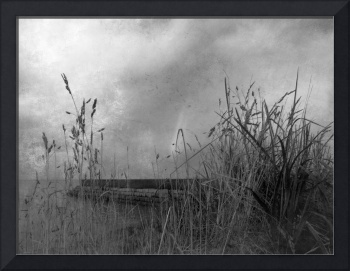 Tall Grass by the Breakwater