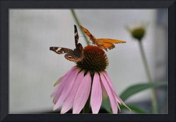 Butterflies on a Flower