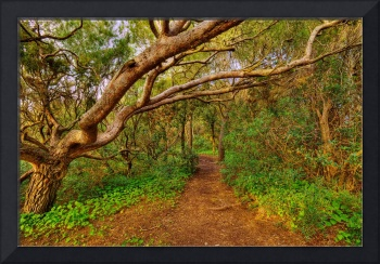 That little path in the forest - HDR