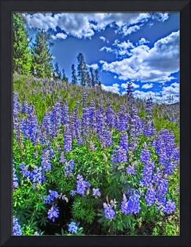 Vibrant Colorado flower field print