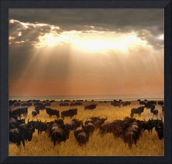 Wildebeest on a field at sunset