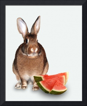 Bunny  With Watermelon