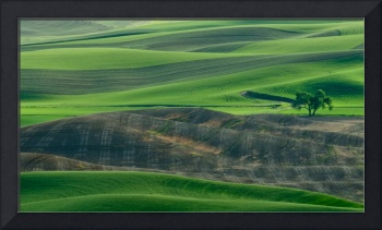 Lone Tree in the Palouse 3