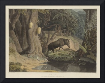 Daniell, Samuel A PICTURESQUE ILLUSTRATION OF THE