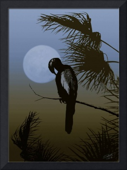 Cormorant in Tropical Moonlight