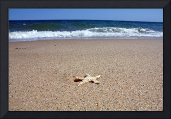 Cape Cod Starfish (Provincelands Beach)