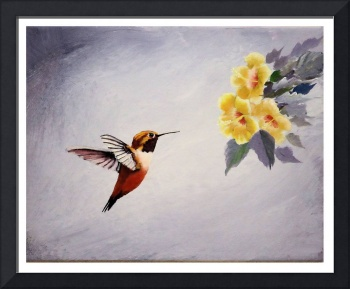 Hummingbird and Yellow Hibiscus