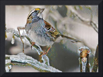 Mosaic White-Throated Sparrow on Icy Branch