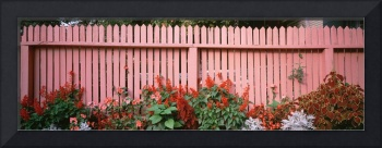 Close-up of flowers growing near a fence