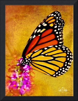 Monarch Butterfly Wall Art
