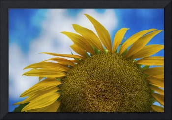 Imperfect Sunflower