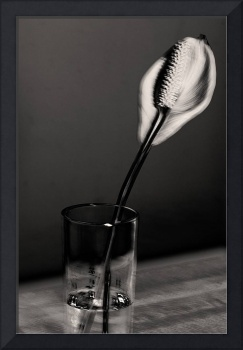 lilly in glass sepia