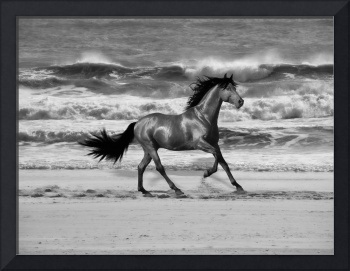 Horse on the Beach-2