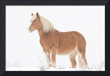 Smiling Palomino Horse in the Snow