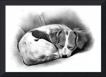 Sleeping Puppy in Pencil