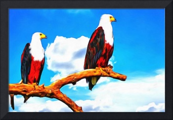 African Fish Eagles Porches