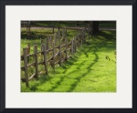 Fence Lines & Shadow_7385 by Denise Davies