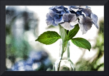 Hydrangeas in a Bottle