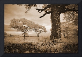 Stories of Old - Infrared Trees Landscape