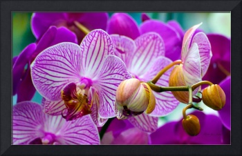 Decorative Orchids Photo A82418