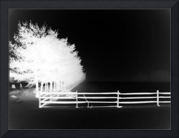 white trees and white fence