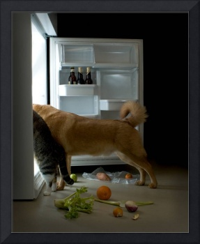 Cat and dog looking for food