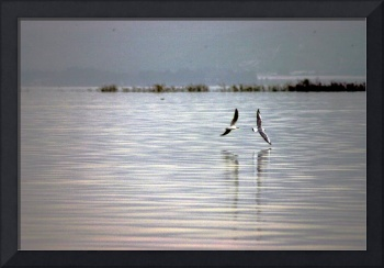 Seagulls on the Sea of Galilee