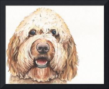 Henry the Endless Eyelashes Goldendoodle