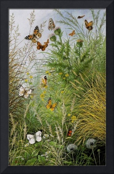 The Butterflies` Haunt (Dandelion Clocks and Thist