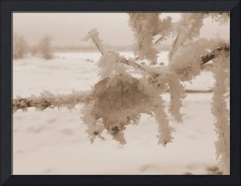 Frosty Leaf - Sepia