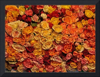 Roses for sale on a market