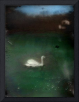 swan in cove color glass photograph