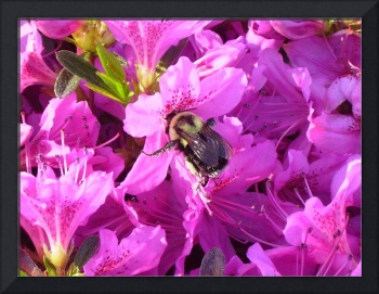 Pink Flower with Bumble Bee