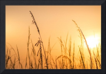 Sunrise and Wild Oats Golden Hour