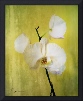Gold Orchid