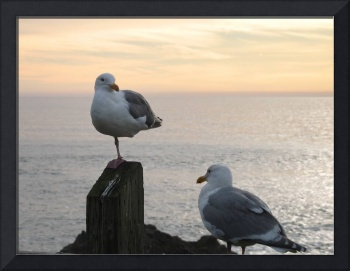 Oregon - Seagulls